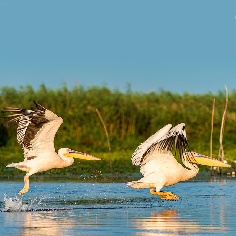 delta dunarii - alsys travel